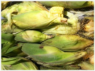 今年玉米怎么卖?会出现玉米难卖吗?
