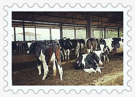中美牛肉贸易将恢复  引发国内养牛业担心