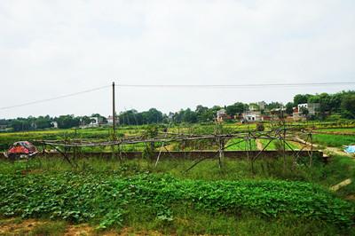 农田治理后土地流转 农民腰包鼓了又鼓