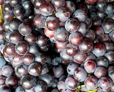 秋天成熟的水果有哪些 吃水果要注意什么