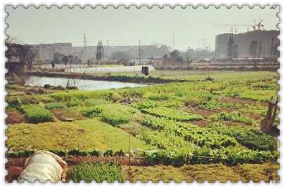 """""""十三五""""成了河南发展现代农业的关键"""