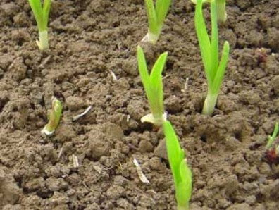 吉林延边:调整种植结构挖掘增收潜力