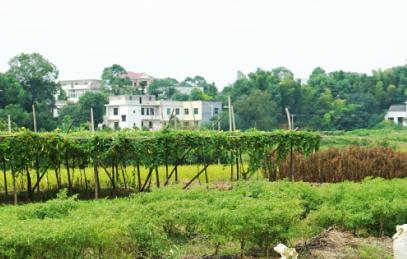 农村土地制度改革能否影响城市房价?