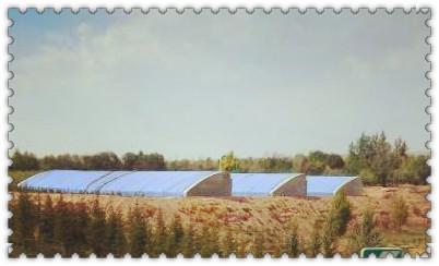 小村整合+土地流转:农民人人有收入 个个都满意