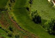 国务院通过《全国农业现代化规划》 促进农业升级农村发展农民增收