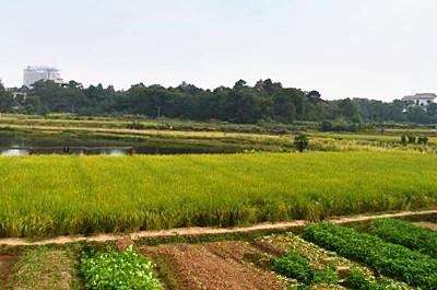 """大安区农业及农村经济发展""""十三五""""规划"""