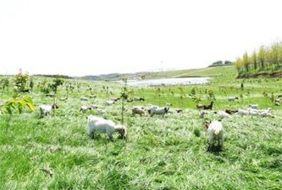 甘肃酒泉:利用草畜产业主攻精准扶贫