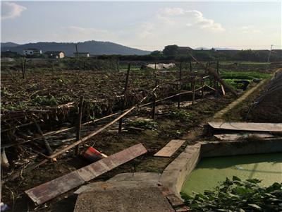 安徽天长半数以上农户流转了土地