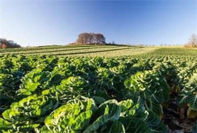 山东省全力打造农产品品牌