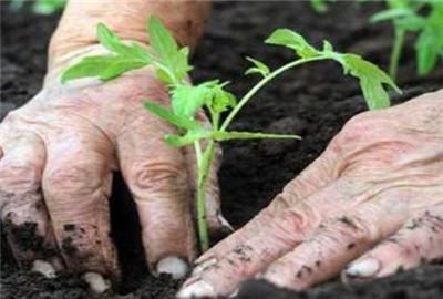 黑龙江:出台农民创业行动  力争到2018年农民创业人数达100万
