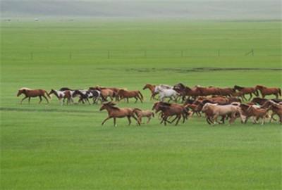 黑龙江省:孙吴县孙吴镇多举措加快生态畜牧业发展