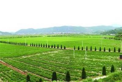 黑龙江:以农业供给侧改革促农村发展农民增收