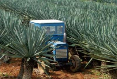 辽宁省出台实施意见推进发挥农垦现代化发展的作用