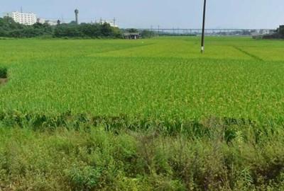 广元市关于抓好2017年小春生产指导意见的通知