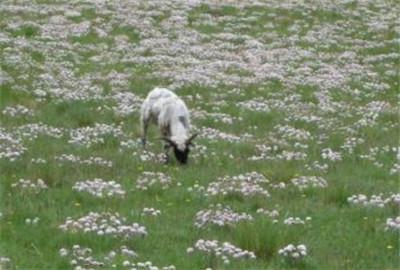 青海省循环畜牧业现场观摩会在海晏举行