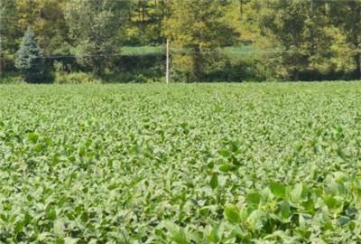湖南省利用互联网创新农业农村信息服务