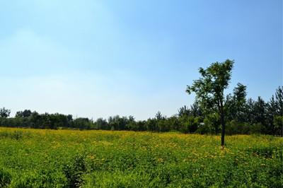 怎样让农民更快实现脱贫致富?百色土地流转种辣木