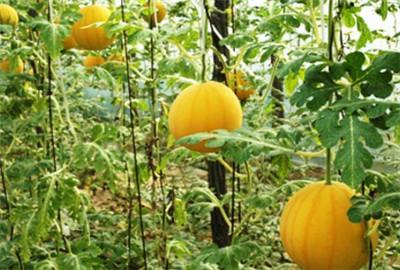 吉林:农业利用调优结构增收不愁