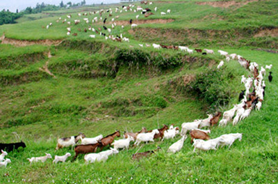 安乡县畜牧业发展规划