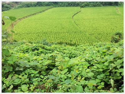 连云港城市周边永久基本农田新增2.44万亩