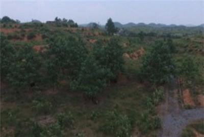 河南省:济源土地流转为何风生水起?