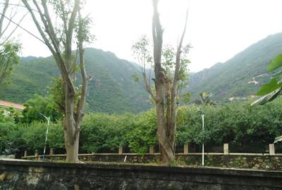吉林省:休闲农业带来农业新生机