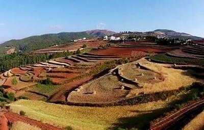 土地流转后农民收入如何?土地规模经营主体发展情况怎样?