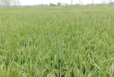 河北省9部门联合发布《2016年度耕地季节性休耕制度试点实施方案》