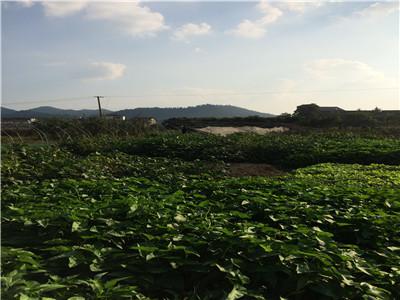 浏阳:土地承包经营权变股权  分享土地产出红利