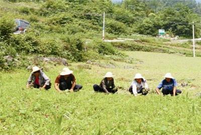 黑龙江省以增加农民收入为目的开发特色观光农业