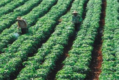 青海省:西宁市利用多渠道开展农业推广工作