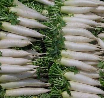 什么时候种萝卜最好?为什么打霜后的萝卜更甜?
