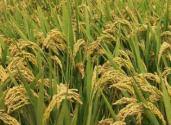 国务院印发《全国农业现代化规划(2016-2020年)》