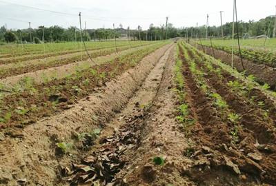 """萝北县发展""""互联网+物联网""""新农业模式"""