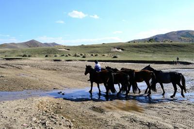 2016年包头市土地流转:农牧产权流转平台土地交易5200多亩