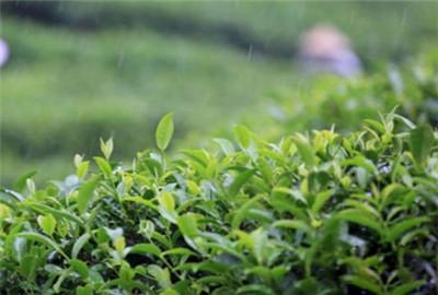 安徽省开展全国农业植物检疫宣传月活动