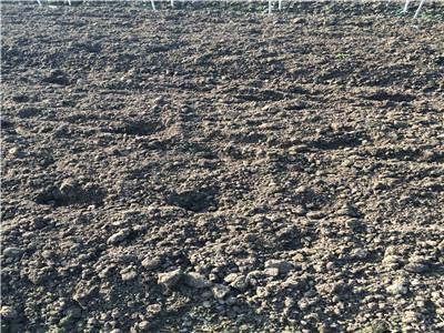 重庆涨谷村:农民土地入股  种植长期收益品种