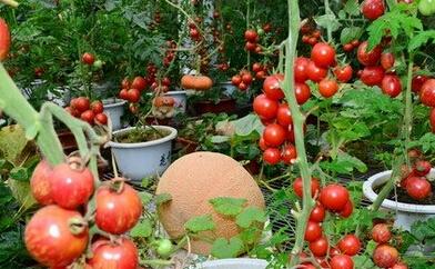 长治市农产品加工业异军突起 全力推进脱贫攻坚