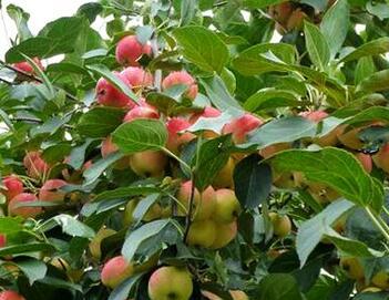 种植果树的最佳季节是什么时候 什么时候施肥最好