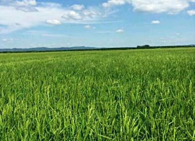 2016陕西土地流转政策实施情况调查:农民收入增加了吗