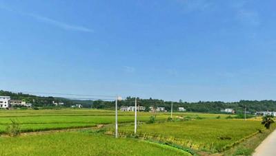 荔浦土地流转让农民获得双重收入