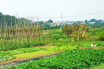 江苏射阳:万亩耕地实行休耕  每亩发放农户250元