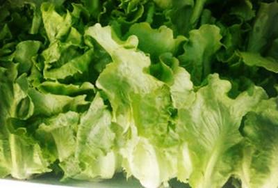 连阴低温天气如何进行蔬菜管理?