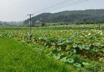唐山市关于实施现代农业发展九大创新行动的意见