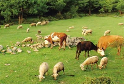 公主岭市加快推进现代畜牧业发展进程