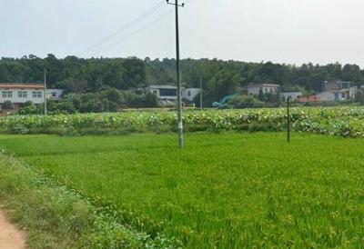 蒙山县出台奖励政策扶持农业发展
