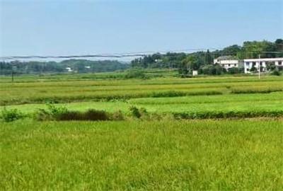 楚雄市强化法律法规宣传增强耕地保护意识