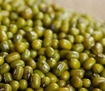 一般绿豆什么时候种植?什么时候收获?不能与什么同食?