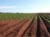 土地流转助推农业现代化进程