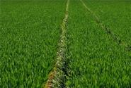 对外合作可以为农业现代化提供更多可能